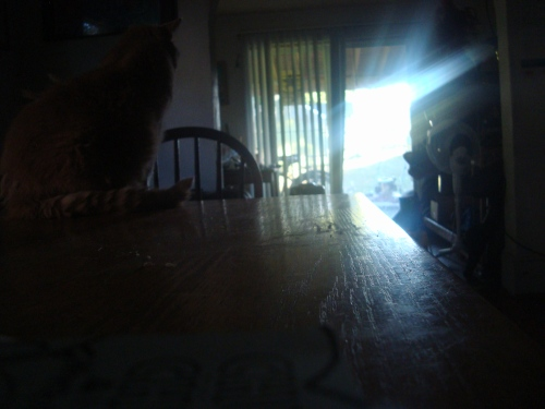 A cat with backlight